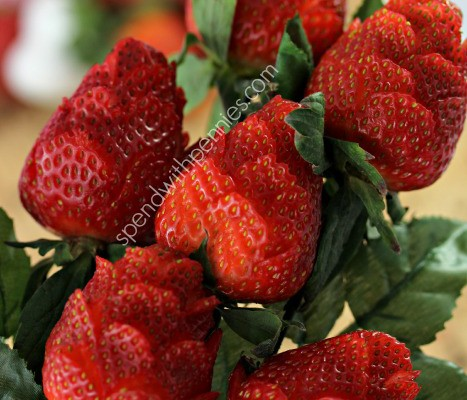 strawberry-roses-4